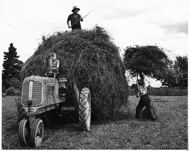 Two men loading hay into a rack with forks