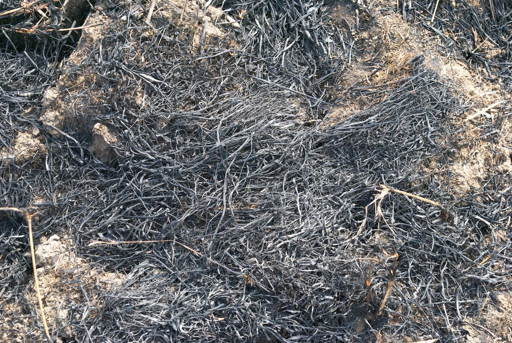 Wood Ash Tillage is a sowing practice followed in parts of Maharashtra. In March or April, the dry branches are burnt and the ash is spread as a manure.