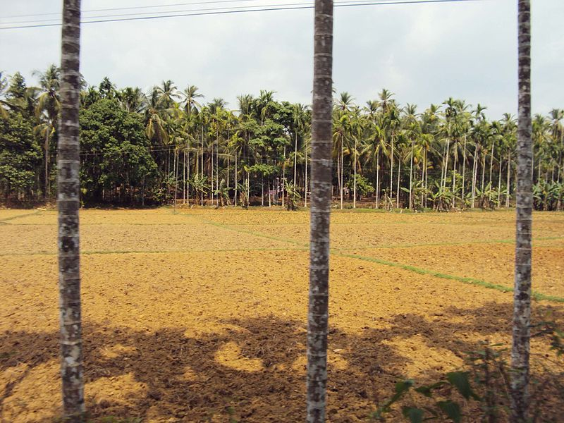 A Dry paddy field
